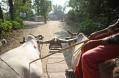 Carreta de Bueyes en pueblo rural de Bhodara