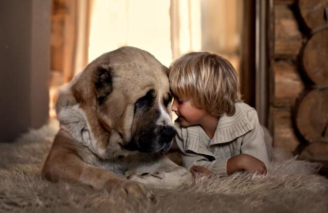 love-dog-3