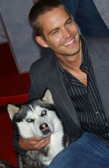 paul walker eight below2
