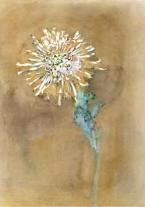 mondrian-crisantemo5