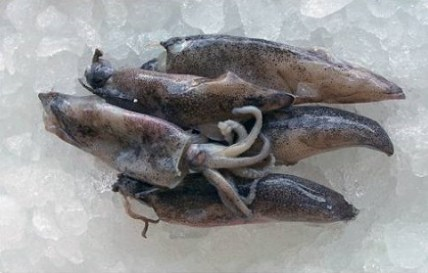 calamares en su tinta1