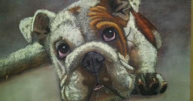 Pintura Bulldog a pastel