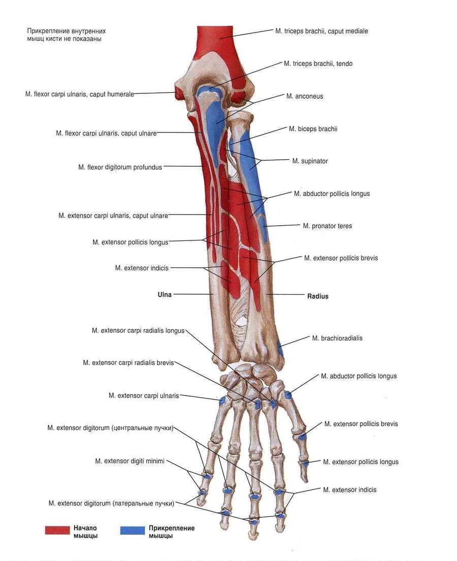 articulațiile rănesc după lupta cu brațele ce medicamente sunt injectate în articulație