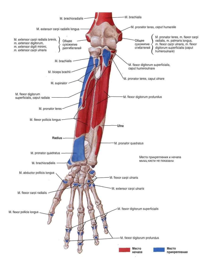 vătămarea umărului când trageți în sus cum să tratezi coatele articulației genunchiului
