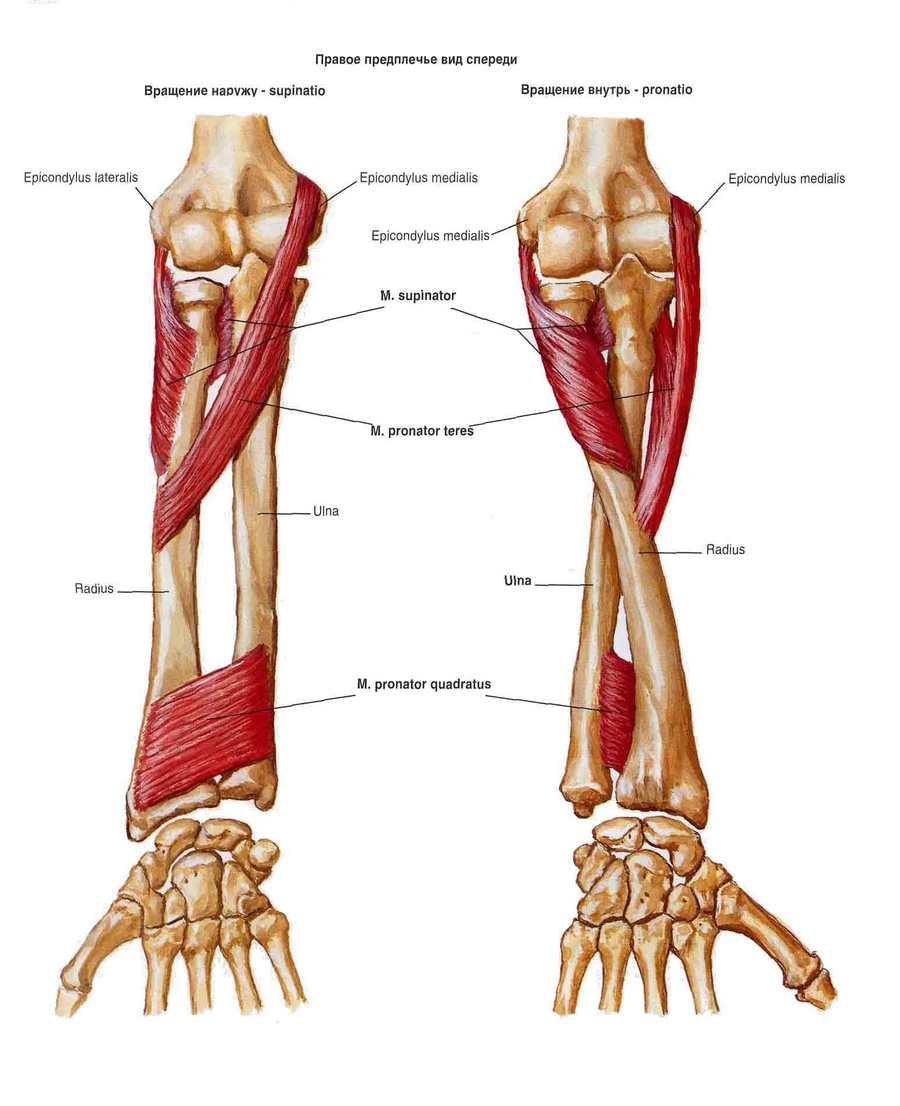 articulațiile rănesc după lupta cu brațele noaptea articulațiile șoldului chiar doare