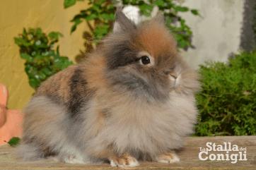 La Stalla dei Conigli Duchessa