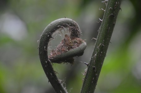 """The new leaf growing on a fern is called a """"fiddlehead"""""""