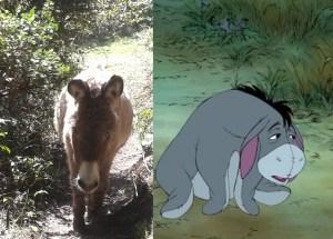 Eeyore's relative