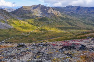 Colorful leaves along the high elevation tundra. www.cecilsandersphotography.com