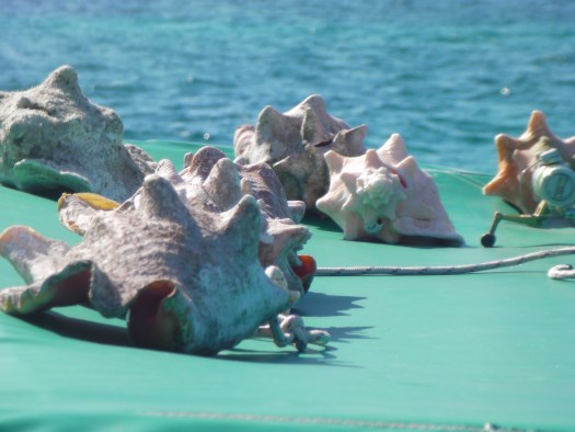 Conch shells on the trampoline