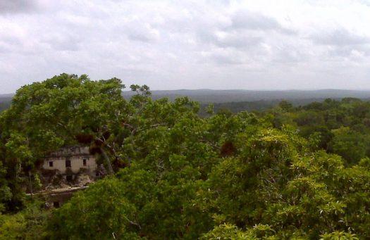 Tikal V View 5