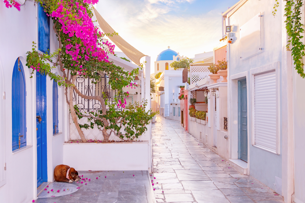 Sunny slate-tiled alleyway lined with pink flowers in Greece
