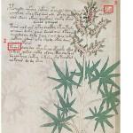 """Identificazione del Gineptro (Juniperus oxycedrus) e relativo """"nome"""""""