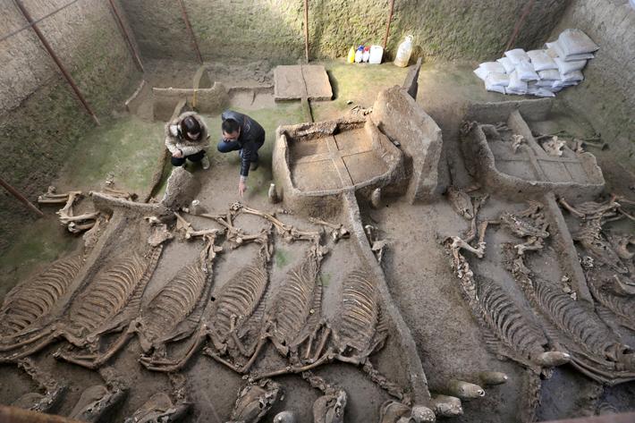 La tomba rinvenuta presso Luoyang con i carri e gli scheletri di cavalli (Foto: imaginechina)