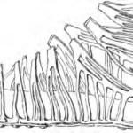 Disegno da Baumeister, 2291