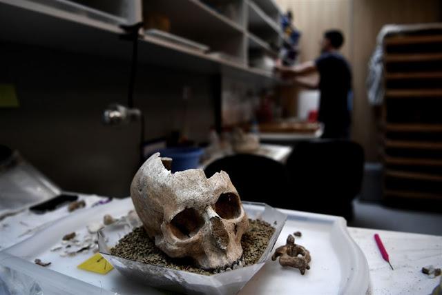 Una foto scattata il 7 luglio 2017 mostra un teschio umano immagazzinato in un laboratorio presso la Scuola Americana di Archeologia di Atene (Foto: Aris Messinis / AFP)