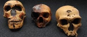 I tre crani rinvenuti a Saccopastore