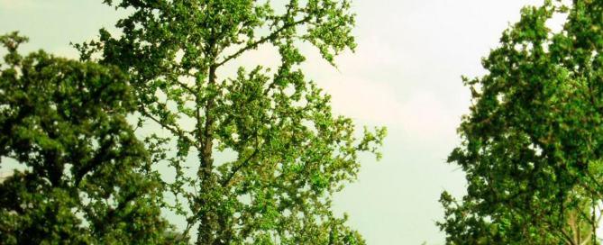 Portada-Wood-Forest-Tree-Arbol-Bosque-Scenery-Escenografía-Warhammer-Mordheim-03