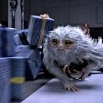 Зачем смотреть фильм «Фантастические твари и где они обитают»