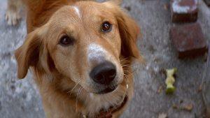 Собачья жизнь скачать, сбачья жизнь смотреть онлайн, собачья жизнь обзор фильма
