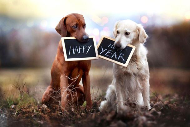 Новый год 2018 как отметить, как отметить новый год собаки, что приготовить на новый год собаки, в чем отмечать новый год собаки