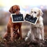 Новый Год 2018: что приготовить, что надеть, что дарить