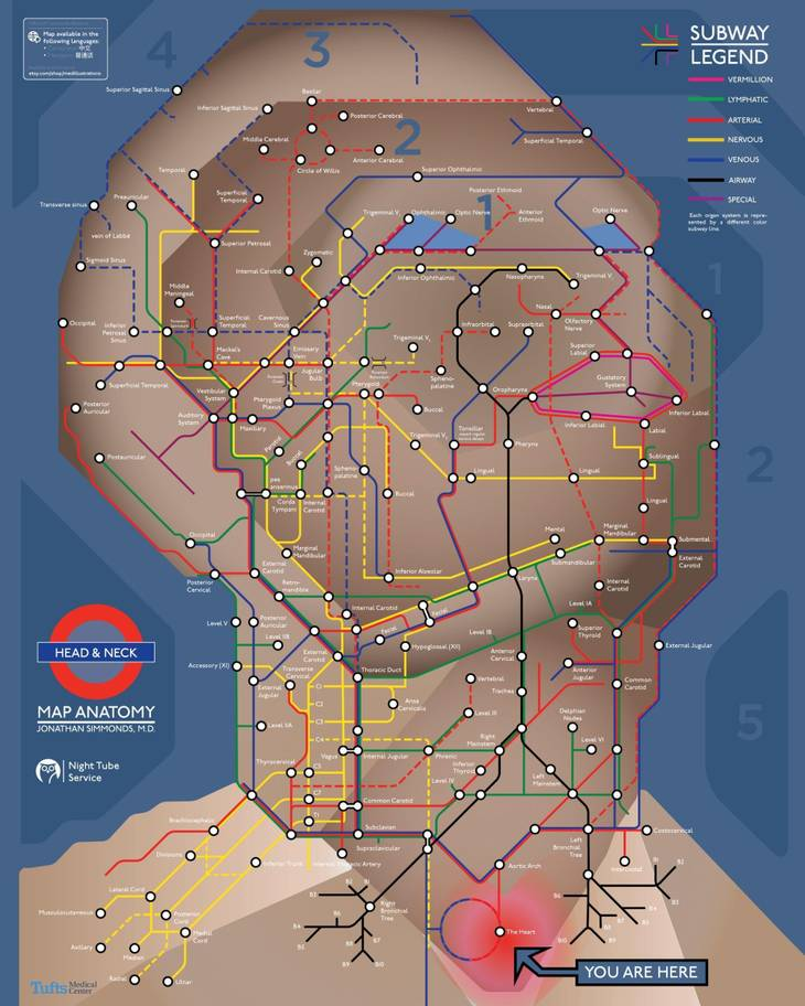 medical human tube map2 - Surgeon uses London Tube to inspire life-size human body map