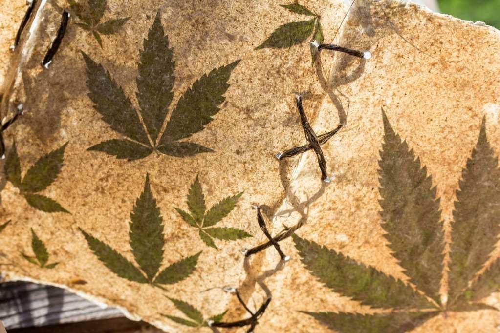 how cannabis got its name