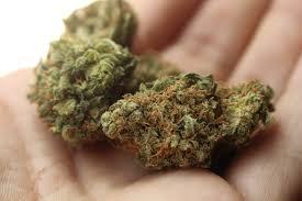 marijuana drug test detection