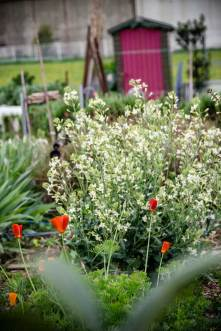 atelier-botanique-marjolaine-jardin