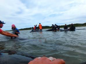 baleines-de-nouvelle-Zelande-03