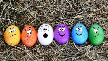 huevos de mosca