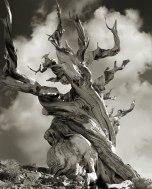 Beth Moon - Bristlecone Pine, USA
