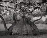 Beth Moon - Croft Chestnut, UK