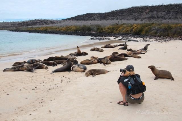 Galapagos colonia di sea lions con me