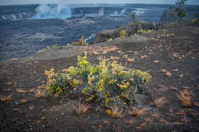 Hawaii scorcio del vulcano