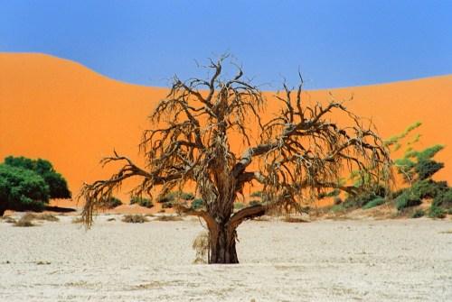 itinerario Namibia, Sossusvlei tree
