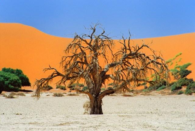 viaggio in Namibia, Sossusvlei tree