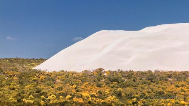 Western Australia duna lungo la Marmion