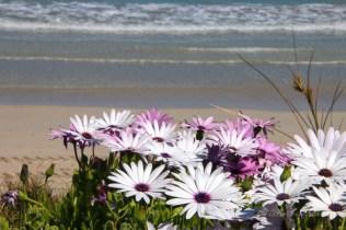 Western Australia fiori