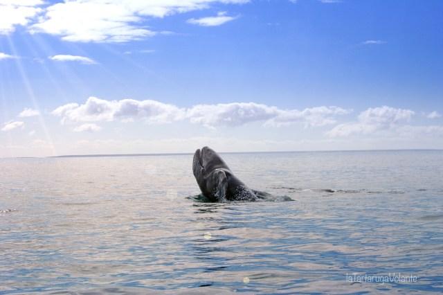 Viaggiare sicuri, baja california e l'incanto delle balene