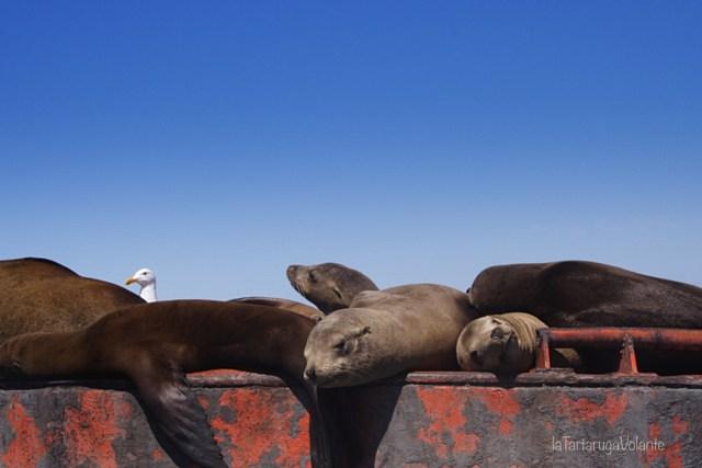 baja california non solo balene