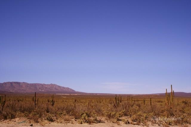 baja california paesaggio di cactus