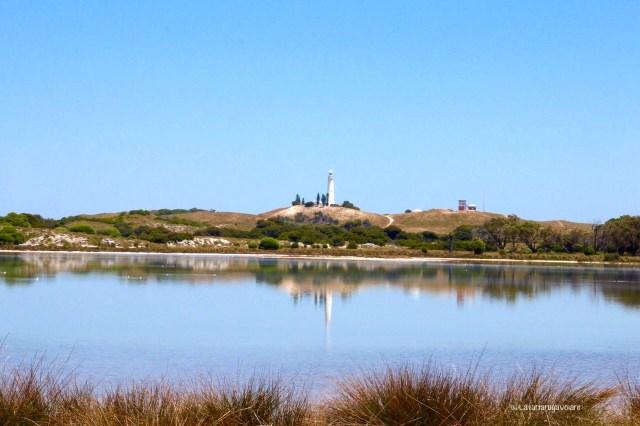western australia sud, il faro di rottenst island