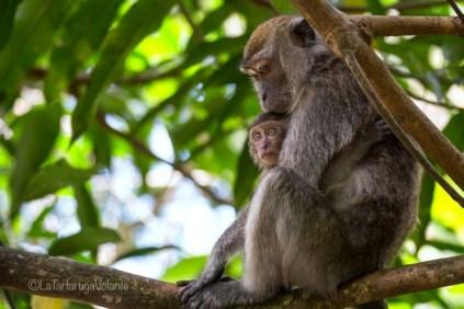 Borneo, Bako NP piccolo curioso