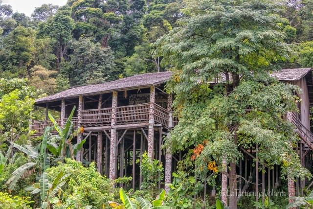 Borneo, giungla e longhouse