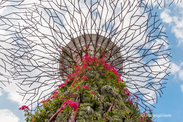 Singapore, particolare del Super Tree