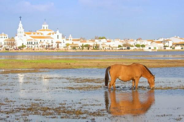 Doñana, El Rocio