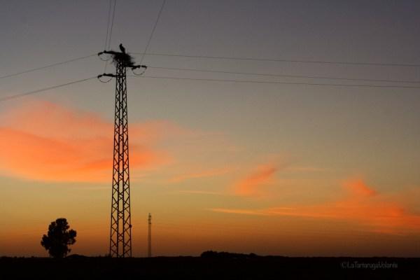 Doñana , cicogna al tramonto