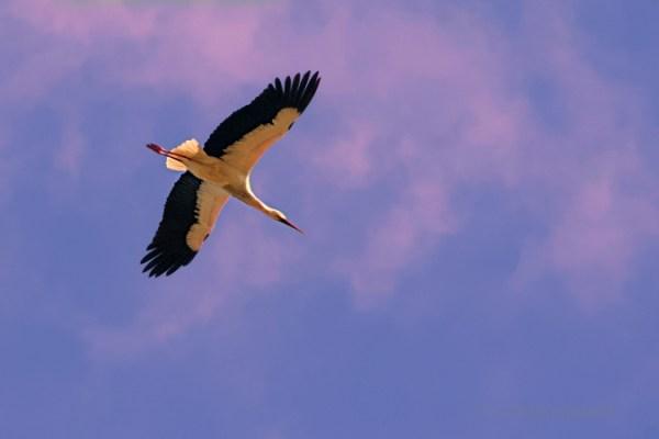 viaggio a Doñana, alla ricerca delle cicogne